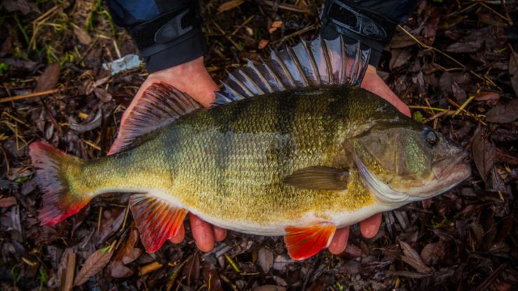 STRIKING HEADS – MONSTER PERCH IN THE NETHERLANDS