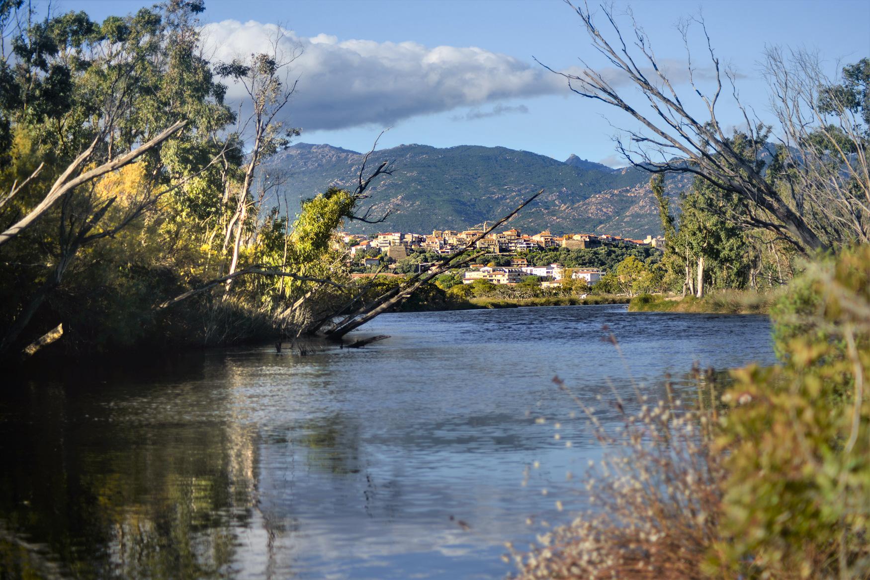 Freshwater Seabass in Corsica